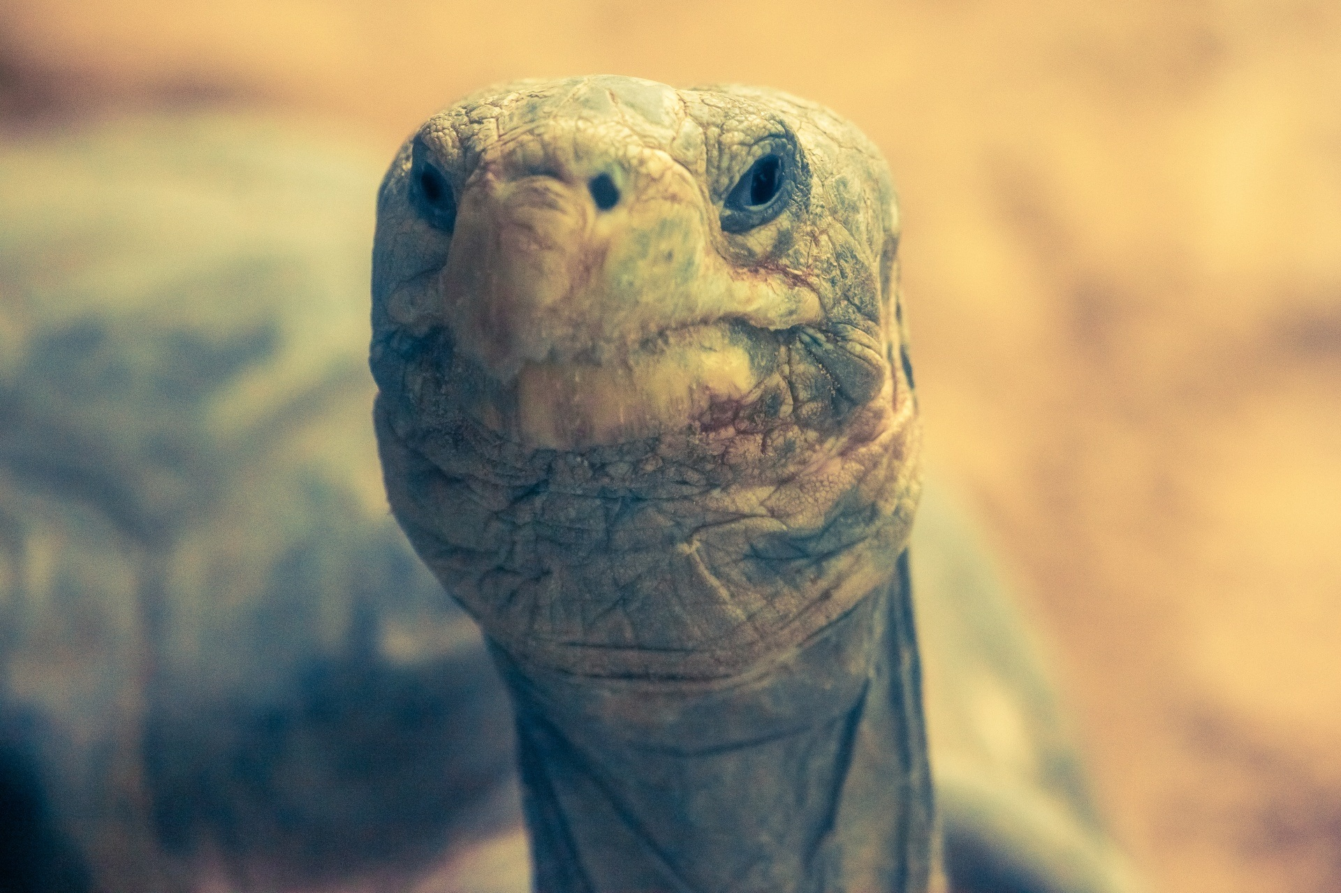 A picture of Galapagos Islands tortoise they're very famous. You'll need to earn a lot of money to spend a year there!